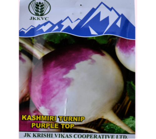 Kashmiri Turnip Top Seeds