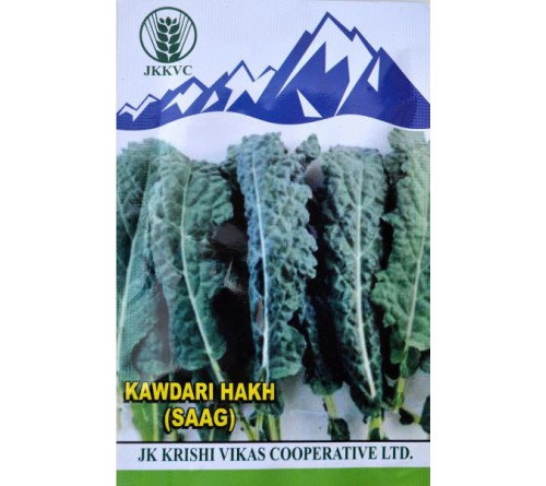 Kashmiri Kawdari Hakh (Saag) seeds